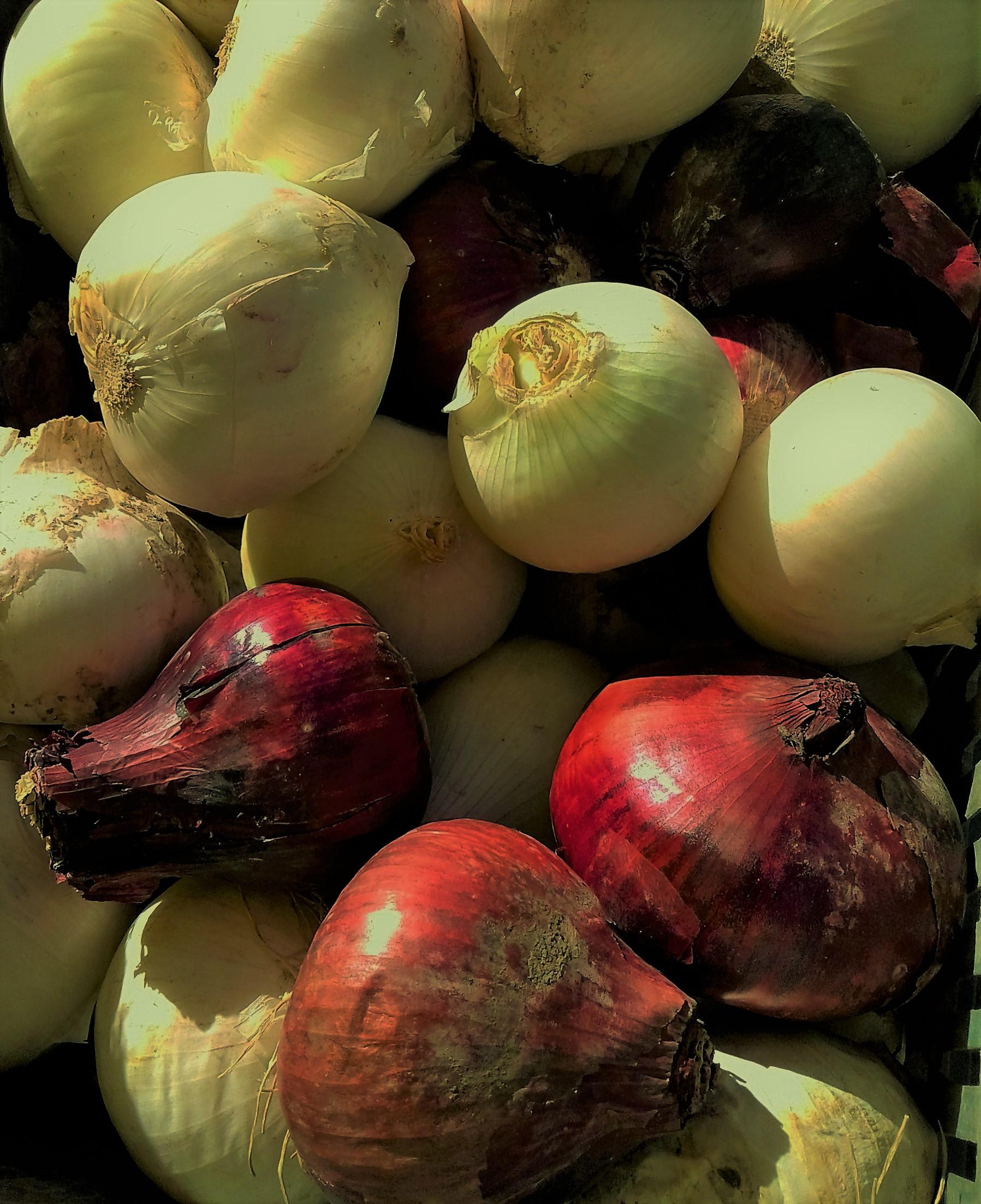 Cipolle rosse e bianche